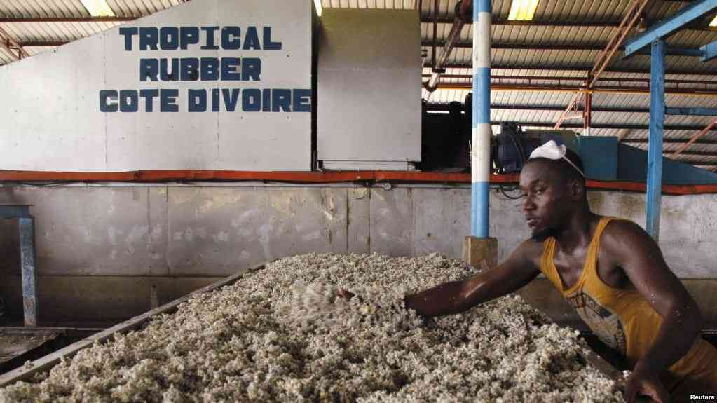 """Résultat de recherche d'images pour """"le caoutchouc en Côte d'Ivoire"""""""